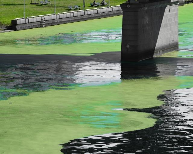 Algae 2 (full size)